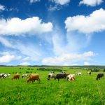 €35m investment for Irish dairy sector innovation